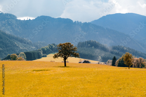 Deurstickers Honing Beautiful landscape with tree and mountains around