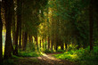 canvas print picture Trail path in botanical coniferous park in sunset light