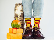 Men's Legs, Funny Socks, Gray, Fluffy Kitten And Ripe Pumpkin. White Background, Isolated, Close-up. Preparing For The Holidays