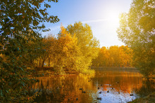 Pond In An Autumn Park Landsca...