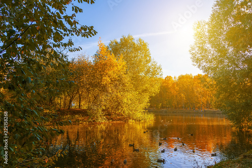 Fototapety, obrazy: pond in an autumn park landscape by the water in autumn forest, reflections of autumn trees and twigs the water of a cold pond.