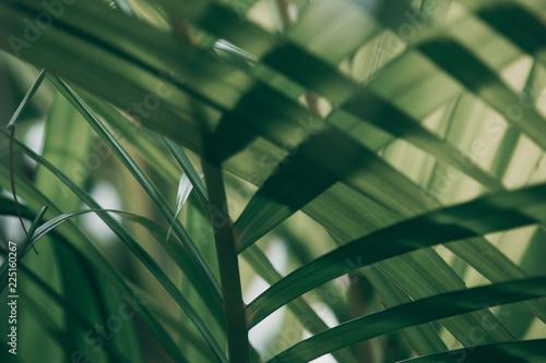 niewyrazne-tropikalny-zielony-lisc-za-oknem-ciemny-ton