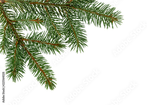 Fir tree branch isolated on white background. Pine. Christmas fir.