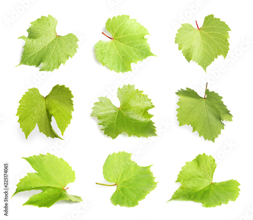 Set with green grape leaves on white background Fototapete