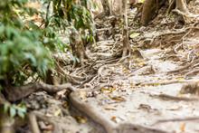 Jungle Vines On Ground