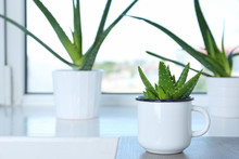 Potted Aloe Vera In Mug And Sp...