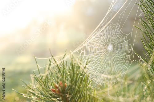 Foto auf Gartenposter Baume Cobweb on wild meadow, closeup view