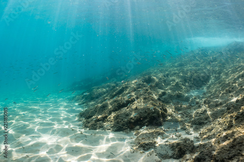 Beautiful underwater landscape with lots of small fish