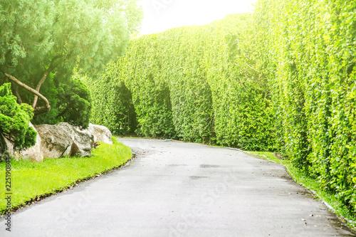 Poster Lime groen A green natural background garden.