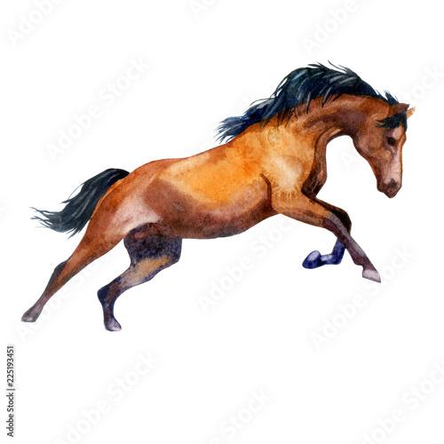 Akwarela ilustracja. Galopujący koń. Koń w ruchu.
