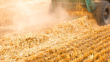 Close-up Yellow Straw On The Field. Ears Of Wheat At Field And Harvesting Machine.
