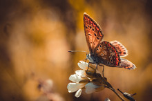 Butterfly And Autumnal Flower ...