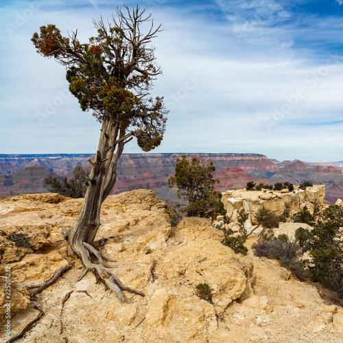 Fotobehang Natuur Park Grand Canyon landscape