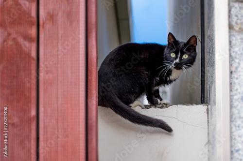 Foto  A black cat warning_don't follow me