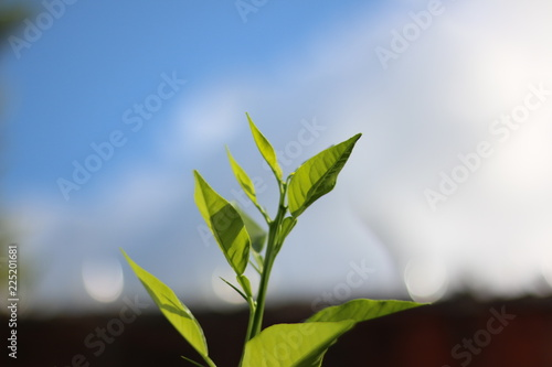 Garden Poster Plant Folhas