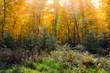 sunbeams autumn trees forest