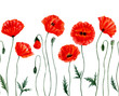 Seamless border -Watercolor Poppies. Red poppy flowers. Poppy flower remembrance day symbol. Isolated on white background.