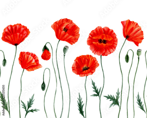 fototapeta na ścianę Seamless border -Watercolor Poppies. Red poppy flowers. Poppy flower remembrance day symbol. Isolated on white background.