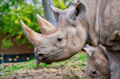 Tuinposter Neushoorn Close view of a black rhino head