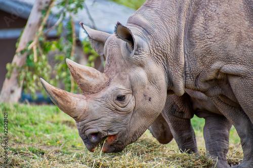 Fotobehang Neushoorn Close view of a black rhino head