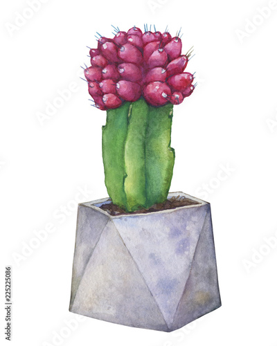 Red Grafted Moon Cactus In A Flower Pot Of Concrete Watercolor Hand Drawn Painting