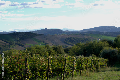 Spoed Foto op Canvas Wit landscape in the mountains,vineyard,agriculture,sky,horizon,hill,view,panorama,clouds,field,countryside
