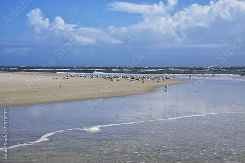 The Amelia Island Florida, Fernandina Beach is occupied by wild birds, Florida, Canvas Print