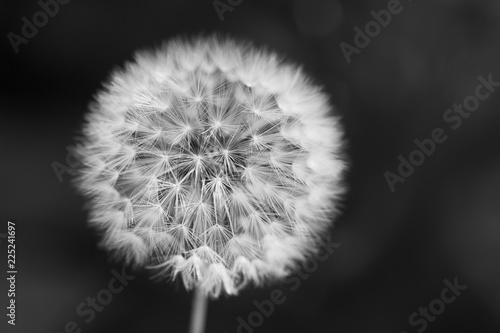 Staande foto Paardebloem Close-up of dandelion seed against a background