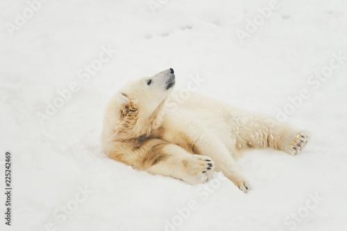 Foto op Aluminium Ijsbeer white polar bear in snow forest