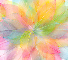 Colored Leafs. Leaf Texture Pattern. Macro Leaves Background Texture. Floral Design. Leaves. Rainbow Colors.