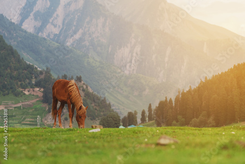 Horse grazing grass on meadow with mountain and forest view in the morning