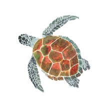 Sea Turtle Watercolor Isolated...