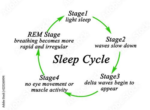 Photo  Stages of Sleep Cycle