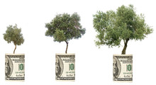 Olive Threes Growing From Dollar Bill