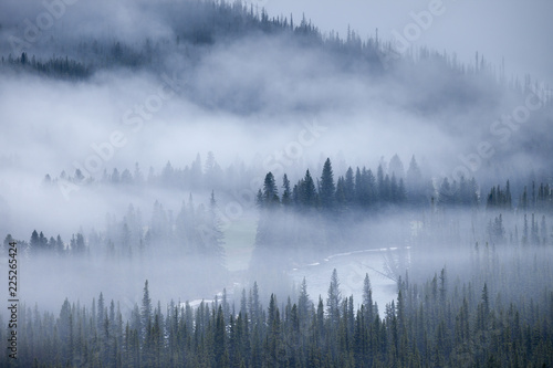 Poster Ochtendstond met mist A foggy morning the forests of the Rocky Mountains of Alberta, Canada