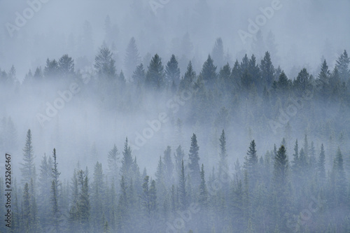 Fotobehang Bossen A foggy morning the forests of the Rocky Mountains of Alberta, Canada
