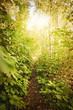 Sonne leuchtet in den Wald