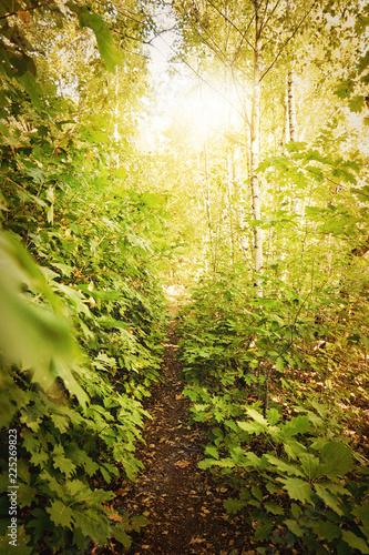 Foto op Canvas Weg in bos Sonne leuchtet in den Wald