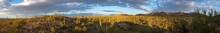 Saguaro National Park American...