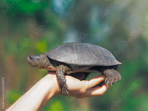 Foto op Aluminium Schildpad Turtle walking at the green grass