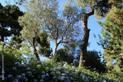 Fotografie, Obraz  Parc de Barcelone