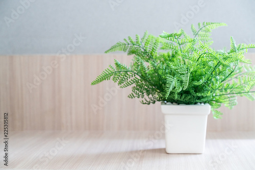 Fern with White pot On Wooden table