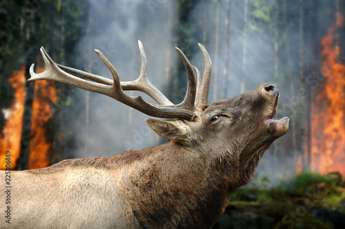 Fotografie, Obraz  Deer stands in burning forest