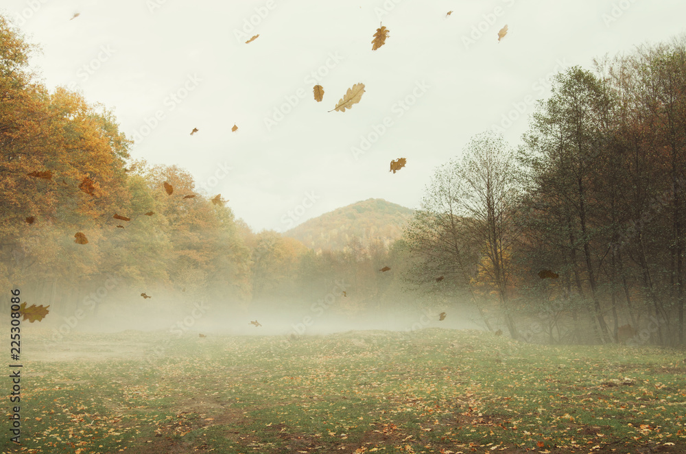 Fototapeta autumn landscape background with leaves falling in the wind