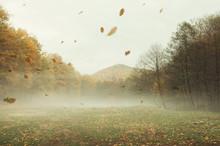 Autumn Landscape Background Wi...