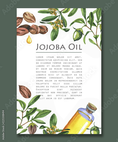 Fotografie, Obraz Watercolor illustration of jojoba oil, branches and flowers