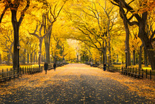 Herbst Im Central Park In New York City, USA