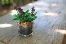 Succulent And Flower In Glass Pot On Wooden Table Background With Copy Space
