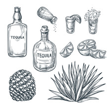 Tequila Bottle, Shot Glass And Ingredients, Vector Sketch. Mexican Alcohol Drinks. Agave Plant And Root.