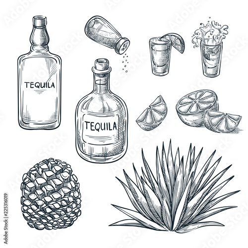 Canvas Print Tequila bottle, shot glass and ingredients, vector sketch